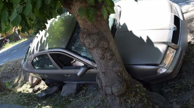 Ittasan hajtott fának egy ságvári sofőr