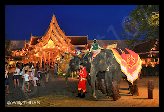 Elepahants waiting to take you for a ride at Phuket Fantasea