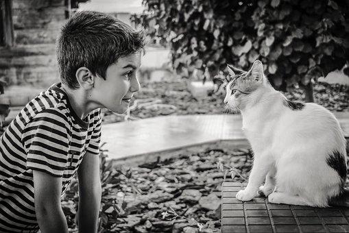 Bagaimana Cara Agar Kucing Tidak Jahat Sama Kita.
