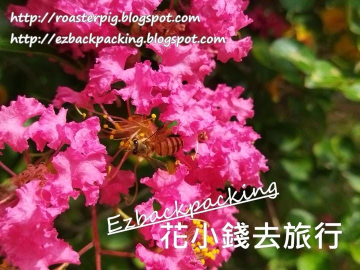 香港紫薇花好去處