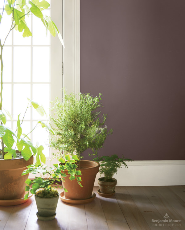 terra cotta planters on wood floor with walls painted in Benjamin Moore Amazon Soil