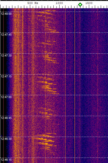 Mystery beacon on 28.319 MHz?