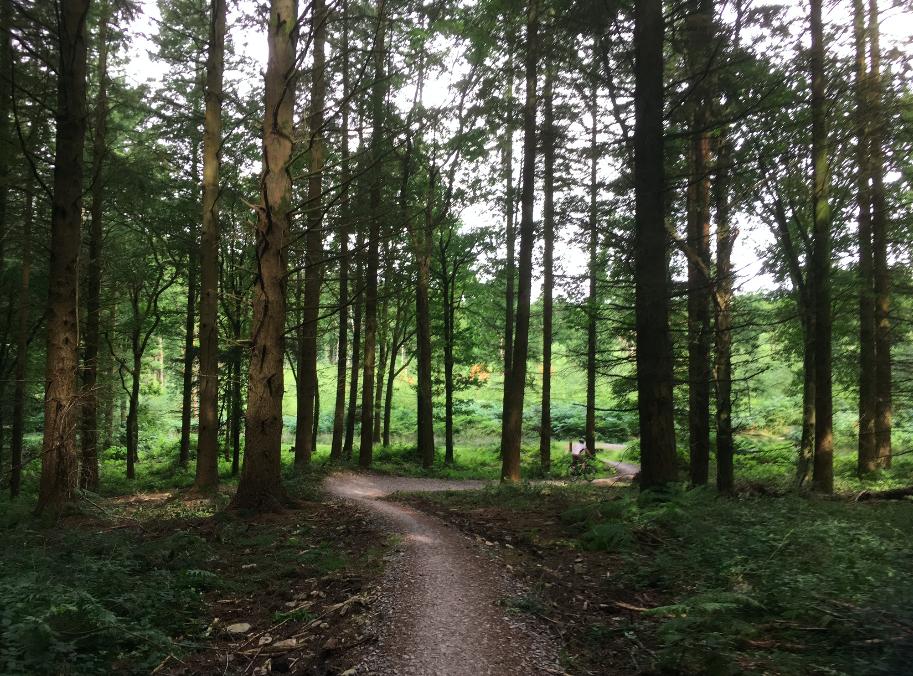 FitBits | Mountain biking in Wales | Llandegla