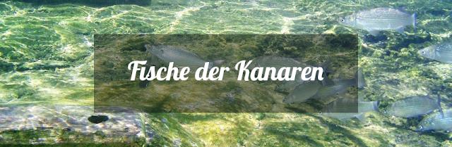 Die Fische der Kanaren in der Übersicht