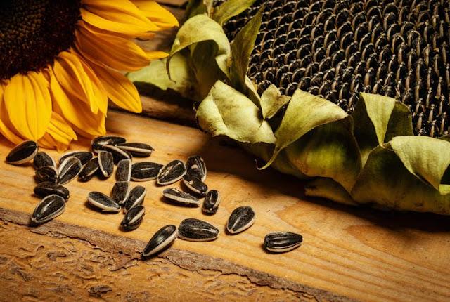 Schälsonnenblumen der Ferme Jaggi: Die Regeln der Natur respektieren