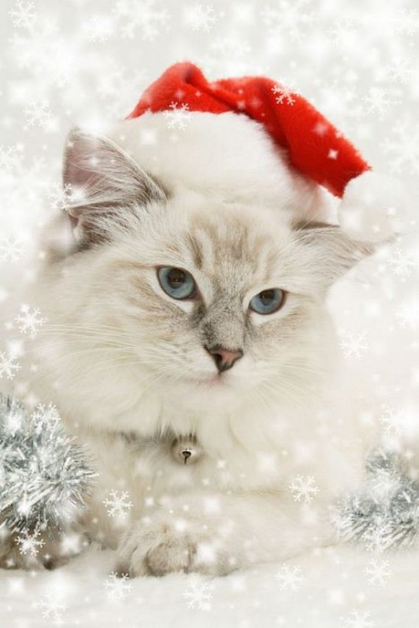 Beautiful Animals Dress Up For Christmas Ladies Mails