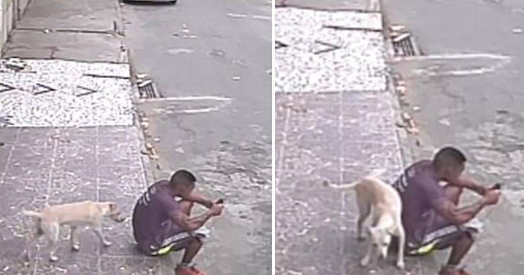 Σκύλος πέρασε τον άνθρωπο για δέντρο και....(βίντεο)