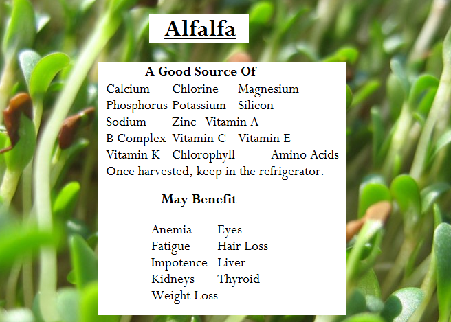 Alfalfa Benefits