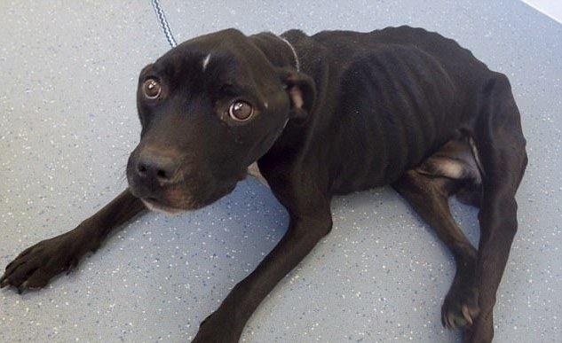 10 лет не приближаться к животным: вердикт суда человеку, чей пес оголодал до состояния живого скелета