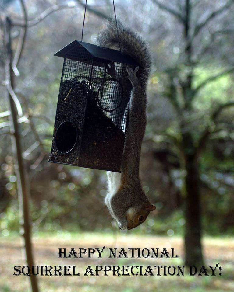 National Squirrel Appreciation Day Wishes Photos