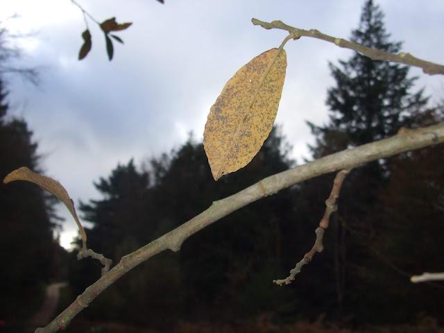 autumn, season, nature