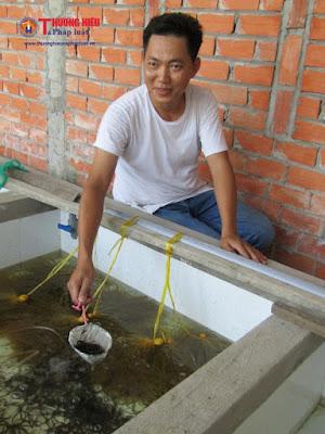 Trở thành tỷ phú trẻ từ lươn giống của chàng trai trẻ Vĩnh Long