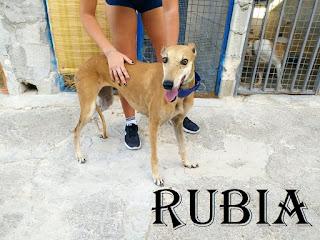 https://abydajaenblog.blogspot.com/2020/09/rubia-en-adopcion.html