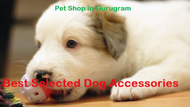 pet shop in gurgaon sector 14, pet shop near me gurugram, pet shop in gurgaon sector 56, dog pet shop near me gurgaon, dog shop gurgaon, gurugram dog shop, dog shop gurugram