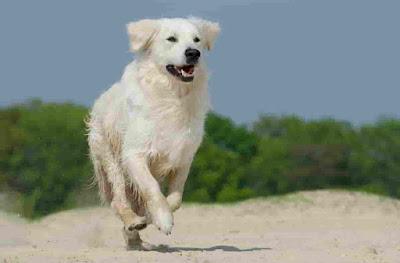 Italian dogs, Italian dog breeds
