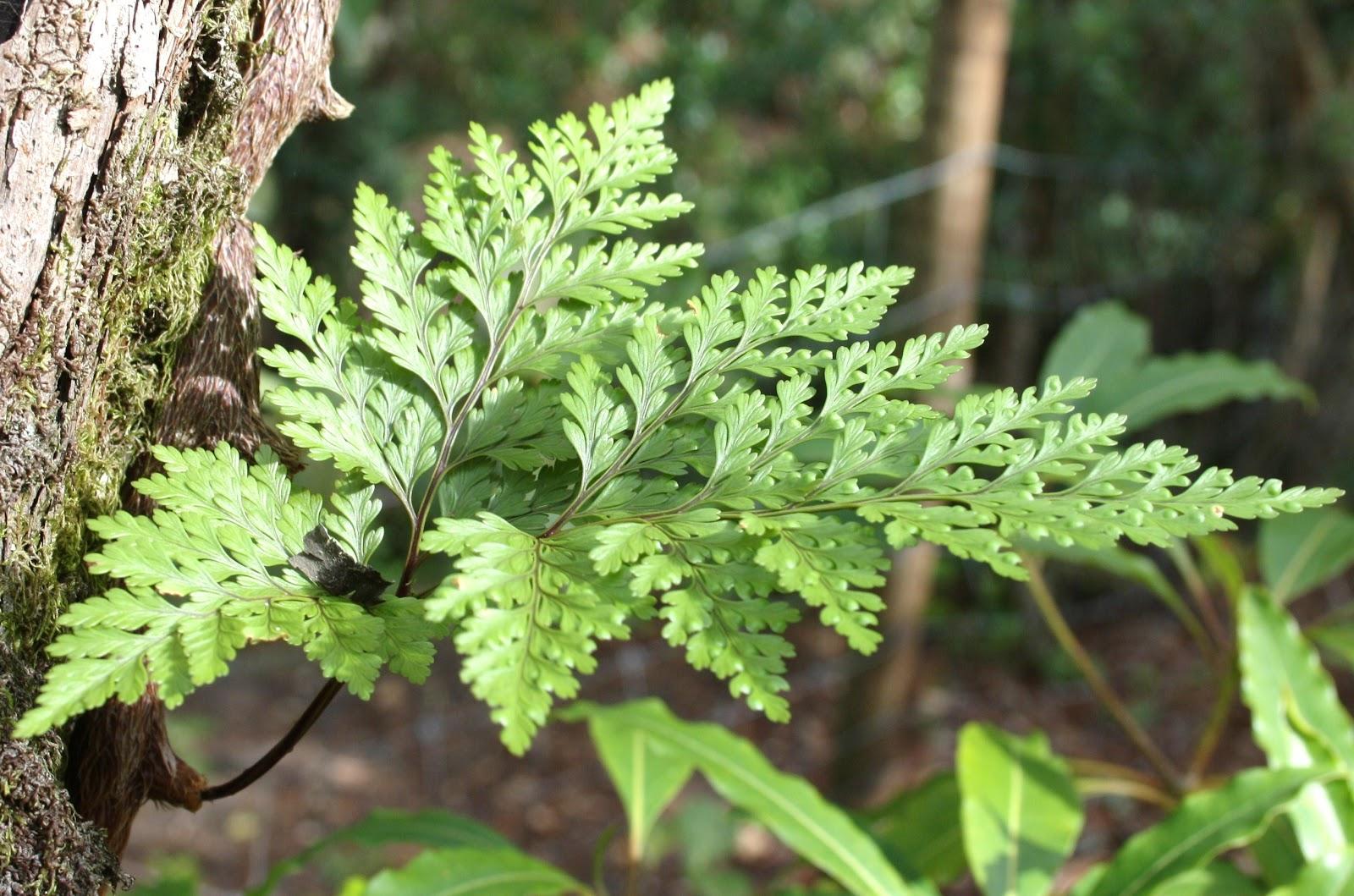 tipo de plantas