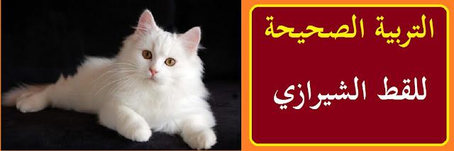 """""""القطط الشيرازي"""" """"القطط الشيرازي البيضاء"""" """"القطط الشيرازى الصغيرة"""" """"القطط الشيرازي بتاكل ايه"""" """"القطط الشيرازى مون فيس"""" """"القطط الشيرازي تاكل ايه"""" """"القطط الشيرازي الرمادي"""" """"القطط الشيرازي انواع القطط"""" """"قطط شيرازي moon face"""" """"قطط شيرازي olx"""" """"القطط الشيرازى البيضاء الصغيرة"""" """"أسعار القطط الشيرازي البيضاء"""" """"القطط الشيرازى الصغيرة واسعارها"""" """"أسعار القطط الشيرازي الصغيرة في مصر 2021"""" """"اكل القطط الشيرازى الصغيرة شهرين"""" """"سعر القطط الشيرازي الصغيرة في مصر"""" """"اكل القطط الشيرازى الصغيرة"""" """"اسعار القطط الشيرازى الصغيرة فى مصر 2022"""" """"تربية القطط الشيرازي الصغيرة في المنزل"""" """"شكل القطط الشيرازى الصغيرة"""" """"اشكال القطط الشيرازى الصغيرة"""" """"ثمن القطط الشيرازى الصغيرة"""" """"قطط شيرازى صغيرة"""" """"قطط شيرازى صغيرة للبيع"""" """"سعر القطط الشيرازي الصغيره"""" """"القطط السيامى بتاكل ايه"""" """"القطط بتاكل ايه"""" """"القطط تاكل ايه"""" """"القطط الصغيرة تاكل ايه"""" """"القطه بتاكل ايه"""" """"القط الشيرازي مون فيس"""" """"قطط شيرازى مون فيس"""" """"قطط شيرازى مون فيس للتبنى"""" """"قطط شيرازى مون فيس للبيع فى مصر"""" """"القطط الشيرازى المون فيس"""" """"القط الشيرازي بيكي فيس"""" """"قطط شيرازى دول فيس"""" """"قطط شيرازى بيكي فيس للبيع"""" """"قطط شيرازى مون فيس بيور"""" """"اكلات القطط الشيرازي"""" """"القط الشيرازي الرمادي"""" """"الوان القطط الشيرازى"""" """"الوان القطط الشيرازي"""" """"انواع قطط الشيرازي بالصور"""" """"انواع القطط انواع القطط"""" """"القطط انواع القطط"""" """"ما هي انواع القطط الشيرازى"""" """"قطط شيرازي مون فيس صغيره"""" """"قطط شيرازي مون فيس للتبني"""" """"قطط شيرازي مون فيس ذكر"""" """"قط شيرازي مون فيس"""" """"قطط الشيرازي مون فيس"""" """"قط شيرازي مون فيس رمادي"""" """"قط شيرازي مون فيس مشمشي"""" """"قطط شيرازي مون فيس للبيع"""" """"قطه شيرازي مون فيس"""" """"قطط شيرازي للبيع"""" """"قطط شيرازي للتبني في القاهرة"""" """"قطط شيرازي ابيض للبيع"""" """"قطط شيرازي صغيرة للبيع"""" """"قطط شيرازي للبيع في مصر"""" """"قطط للبيع بمصر"""" """"قطط للبيع مصر"""" """"سعر قطط شيرازي في مصر"""" """"قطط شيرازي للبيع بالاسكندرية"""""""