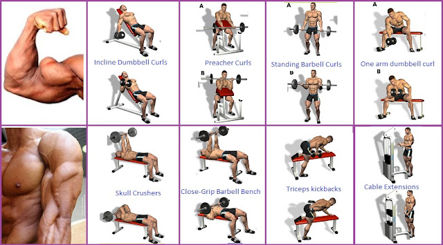 Armed' and Dangerous - The Ultimate Arm Workout - all ...