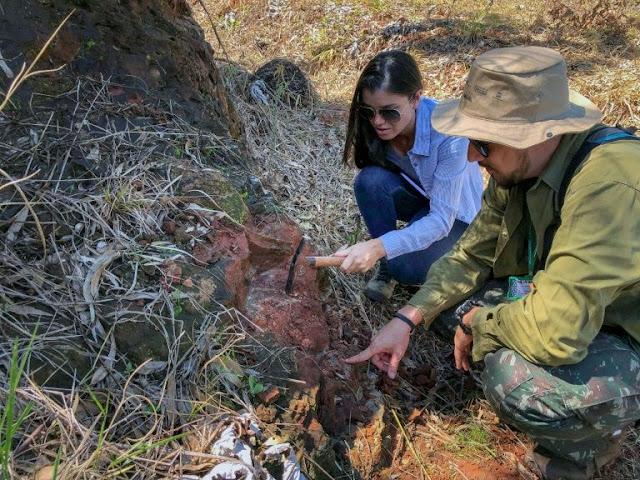 Desert-dwelling carnivorous dinosaur found in Brazil