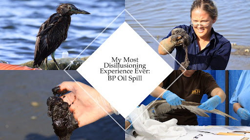 Laura's September 1 Zoom program: BP Oil Spill: My Most Disillusioning Experience Ever