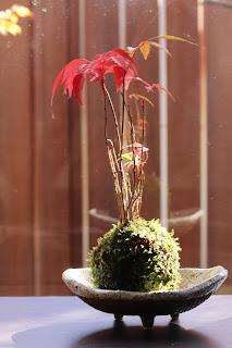 三本脚のついた楕円形の浅鉢の上のハゼの苔玉
