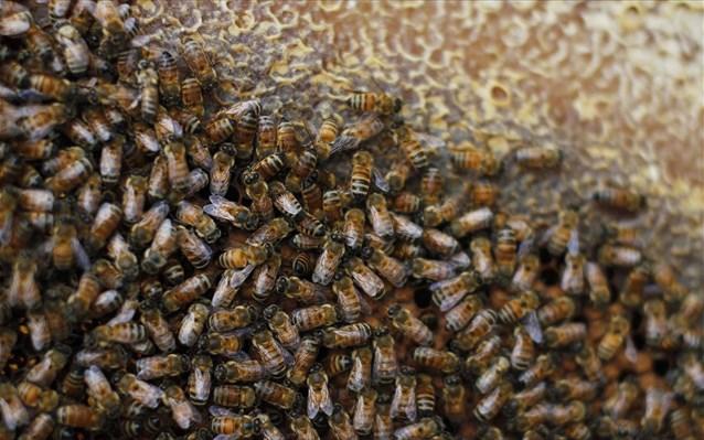 Χάθηκαν περισσότερες από 89.00 αποικίες μελισσών τον περσινό χειμώνα