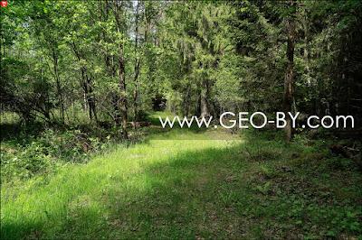 Лесной перекресток, где была cтражница КОП ''Барковщина''