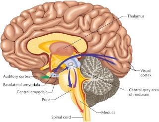 cervello blogger