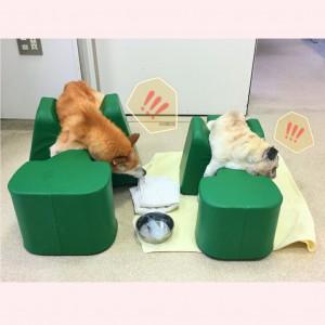 ativação cerebral em cães