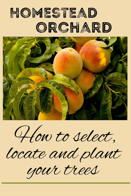 Help in planning your homestead orchard: how to choose trees, where to put them, and how to plant them.