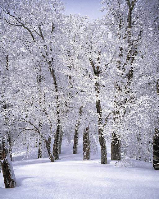 Branch-Cold-Freezing via Pexels.com
