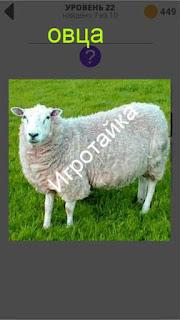 800 слов овца ответы на 22 уровень
