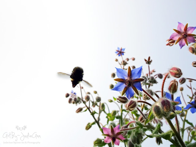 Borage & Bees 21 Photo Series + Video