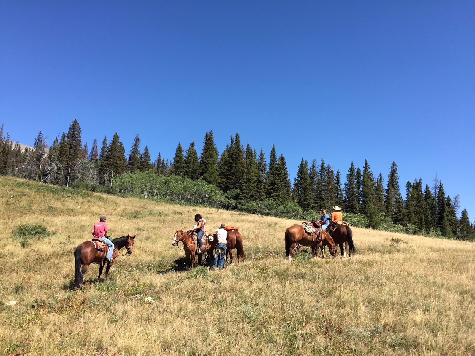 Equine Natural Care Reviews
