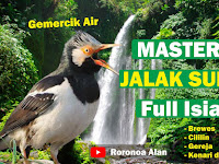 Masteran Jalak Suren Full Isian Tembakan
