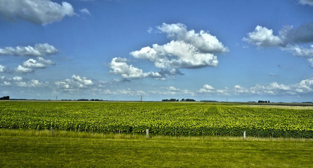 Paisaje de sembradío con nubes