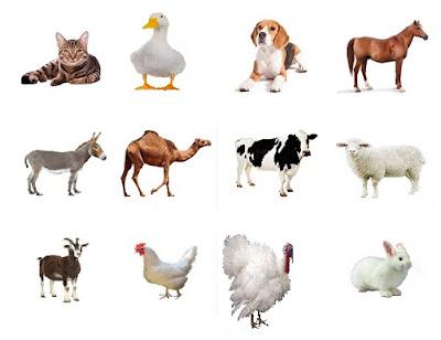 الحيوانات,تربية الحيوانات,تربية الحيوانات الاليفة,الحيوانات الاليفة,تربية الحيوانات الأليفة,الاليفة,الحيوانات الأليفة,السعودية,تربية,تربية الحيوانات الاليفة في المنزل,حيوانات,الصحة,الحياة,سوق الحيوانات الاليفة