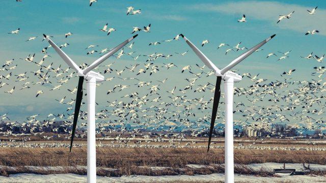 Mαύρη λεπίδα σε ανεμογεννήτριες μειώνει κατά 72% τους θανάτους πουλιών