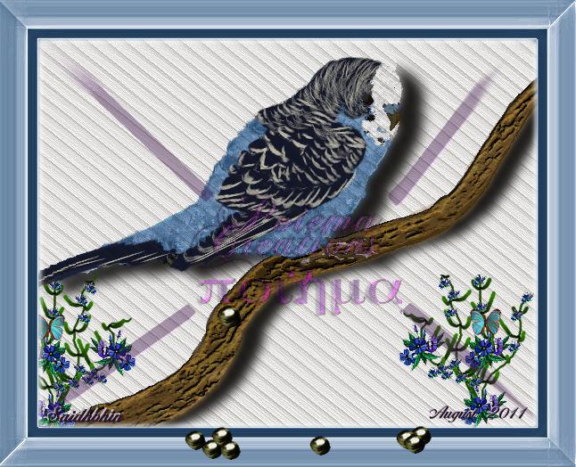 Parakeet Poo Images - Reverse Search