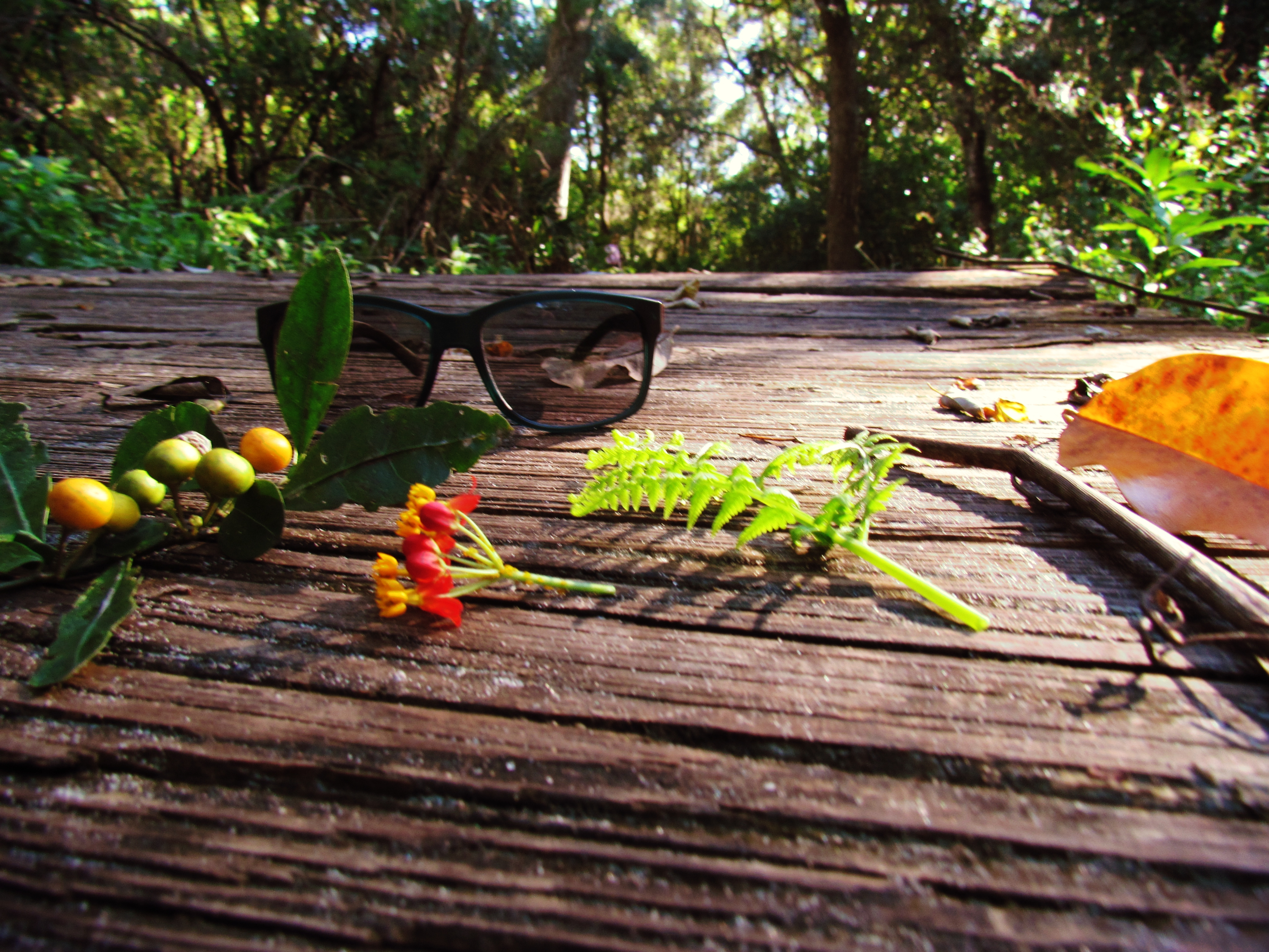 Sunglasses on a wooden boardwalk in mother nature with golden berries and sticks and twigs