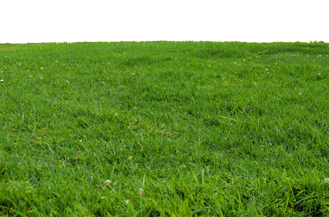 Grass PNG Images Free Download