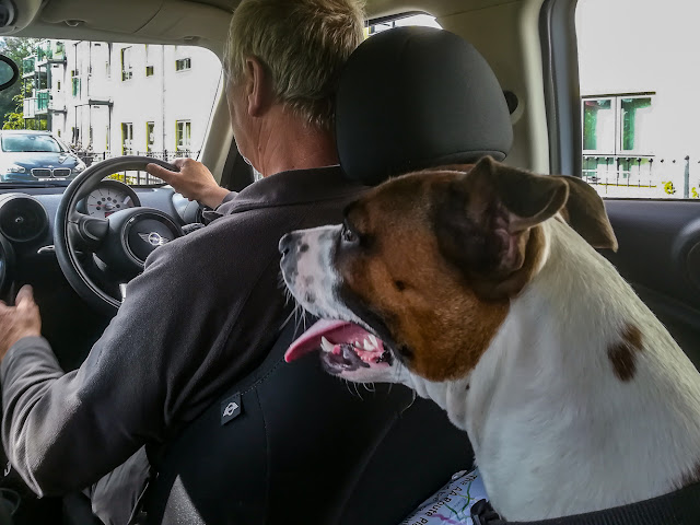 Photo of Ruby on her way home from the vets on Saturday