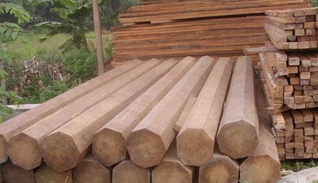 Penghasil kayu jati