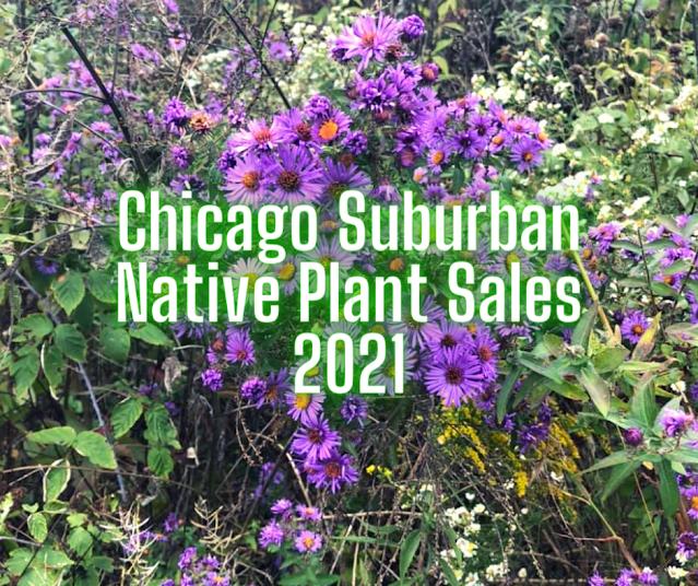 Chicago Suburban Native Plant Sales 2021