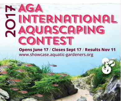Aquascaping Competition 2016 2017 Iaplc Winners