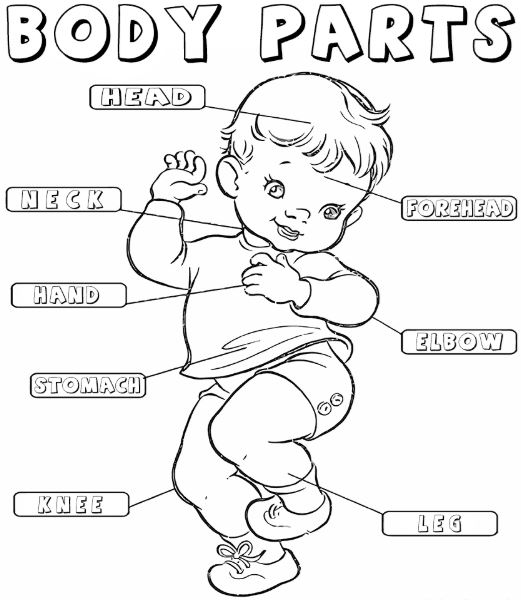 my body coloring book pages - photo#33