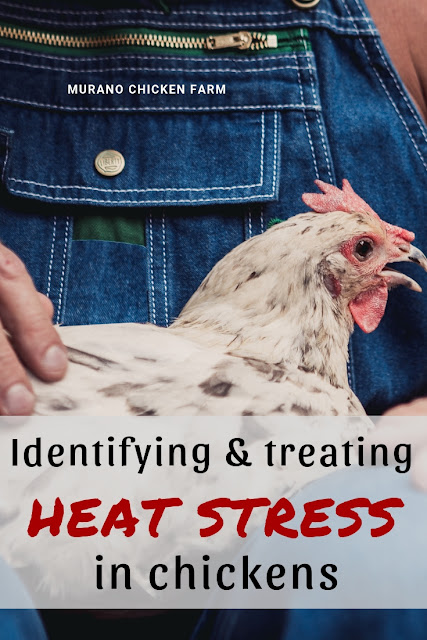 chickens with heat stress