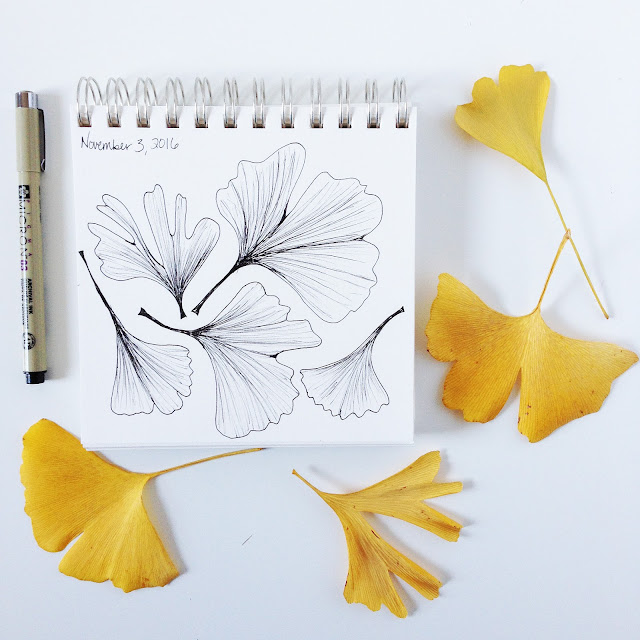 ginkgo leaves, sketchbooks, micron pen, drawing, botanical sketchbook, Anne Butera, My Giant Strawberry
