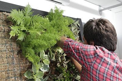 Curso intensivo formaci n jard n vertical jardines con for Historia de los jardines verticales