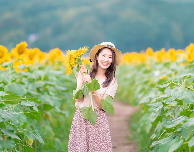 Millions sunflowers field in Japan is picturesque in autumn